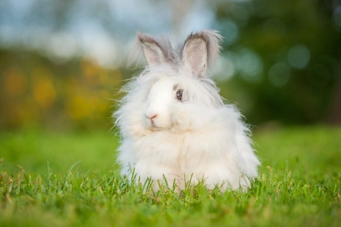 Which bunnies shed the least 01