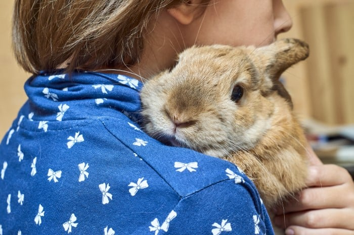 Small Rabbit Breeds to Cuddle 01